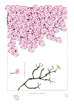 white eyed birds in sakura XVII